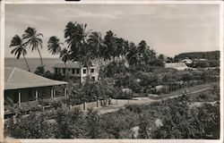 Homes along the beach, palm trees Postcard