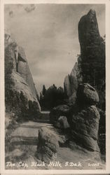 The Traffic Cop, Needles Road, Custer State Park Postcard