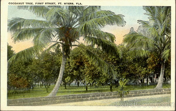 Cocoanut Tree, First Street Fort Myers Florida