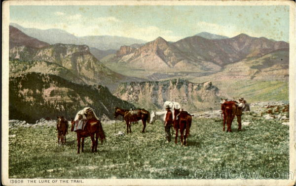 The Lure Of The Trail Cowboy Western