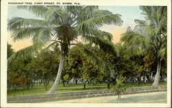 Cocoanut Tree, First Street