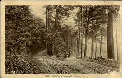 The Pines Postcard