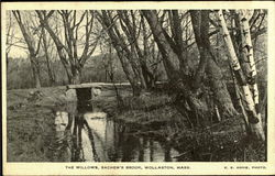 The Willows, Sachem's Brook