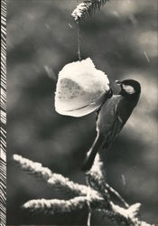 Little Chickadee and a Snow Covered Feeder Postcard