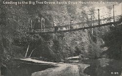 Leading to the Big Tree Grove, Santa Cruz Mountains Postcard