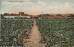 Wine Cellars, Italian-Swiss Colony Postcard