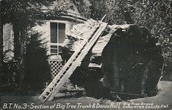 Section of Big Tree Trunk & Dance Hall Calavaras County, Cal. Postcard