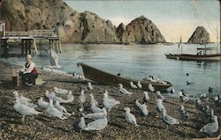 The Sea Gulls at Avalon Postcard