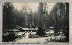 Post Office and Stores, Sequoia National Park Postcard