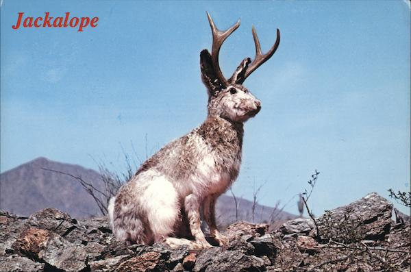 Jakalope. Jackrabbit with antelope antlers The Whole Family