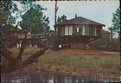 Tree Houses of Hilton Head - Sea Pines Plantation Postcard