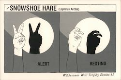 Snow Shoe Hare alert and resting. Wall Hand Shadows. Wilderness Wall Trophy Series #1