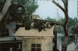 SPIDER MONKEYS at play - Universal Studios Entertainment Center Postcard