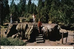 People Standing on Mark Twain's Stump in Kings Canyon National Park, CA Postcard
