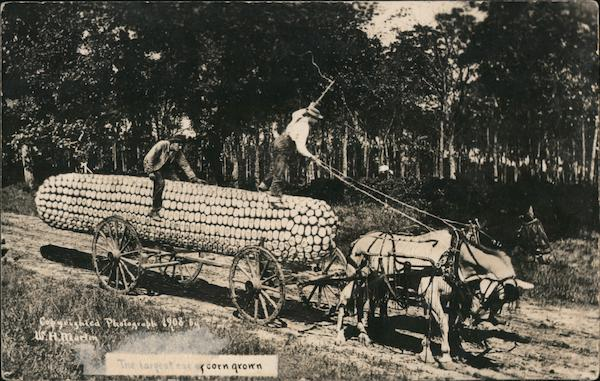 Horses and Cart Hauling the Largest Ear of Corn Exaggeration