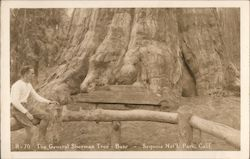 The General Sherman Tree - Base Postcard