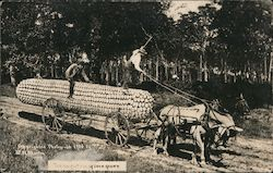 Horses and Cart Hauling the Largest Ear of Corn Postcard
