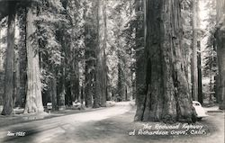 The Redwood Highway Postcard