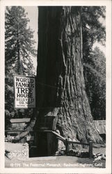 The Fraternal Monarch. World famous tree house. Believe it or not Postcard