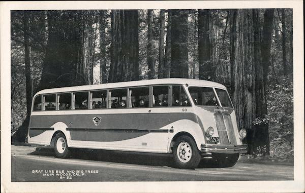 Gray Line Bus and Big Trees, Muir Woods Mill Valley California