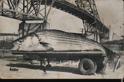 Canal Striper - giant fish on a truck, Cape Cod Postcard
