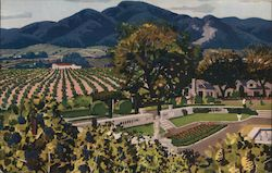 Beaulieu Vineyard in the Napa Valley Postcard
