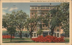 Azaleas in Bienville Square and Cawthon Hotel Postcard