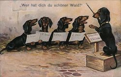 Dachshund Choir Postcard