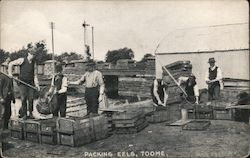 Men Packing Eels In Toome Postcard