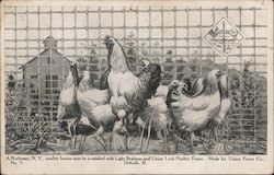 A poultry fancier says he is satisfied with Light Brahmas and Union Lock Poultry Fence. Made by Union Fence Co., DeKalb Postcard