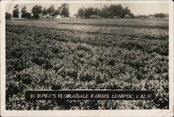 Burpee's Floradale Farms