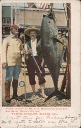 Tuna Caught by Mr. C.P. Morehouse with Rod and Reel Weight 251 Lb Postcard