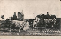 Cop V. Edwards-man standing with sheep Postcard