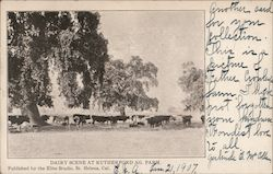 Dairy Scene at Rutherford Ag Farm Postcard