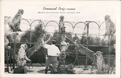Command Performance, Benson Wild Animal Farm Postcard
