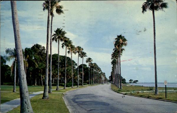 Majestic Royal Palm Line Clearwater Florida