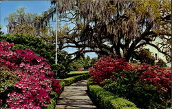 Early Spring In Louisiana