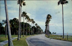 Majestic Royal Palm Line