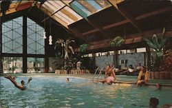 New Tropical Pool at the Curtis Hotel and Motor Lodge Postcard