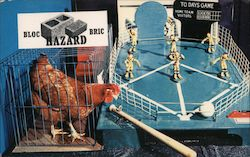 Baseball Playing Chicken - San Diego County Fair Postcard