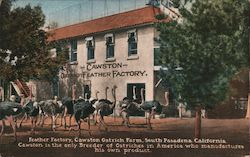Cawston Ostrich Feather Factory Postcard