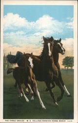 The Three Graces - W.K. Kellogg Arabian Horse Ranch Postcard