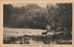 Grazing Deer - Visitors at Ripplewood Resort Postcard