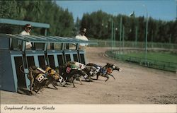 Greyhounds Breaking the Starting Box Postcard