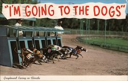 """I'm Going to the Dogs"", Greyhound Racing in Florida Postcard"