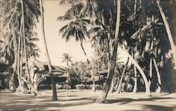 Bungalow and Palm Trees, 234 Beach Walk