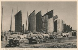 A Wharf in Manchukuo with many Junks Postcard
