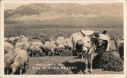 Products of the Nevada Desert Sheep, Donkey Postcard