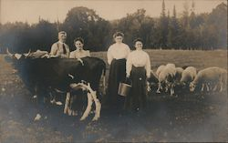 Family with Cows, Sheep Postcard