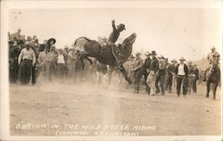 O'Brion in the Wild Steer Riding Audience Postcard